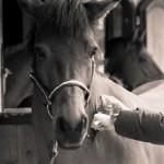 baillyveterinaires-fiche-equine1